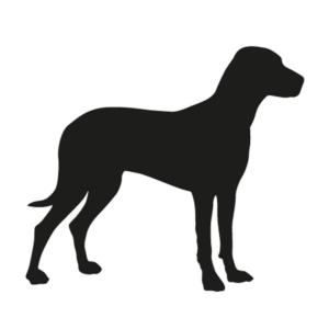 Šunims